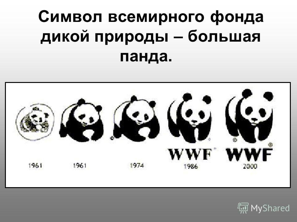 Символ всемирного фонда дикой природы – большая панда.