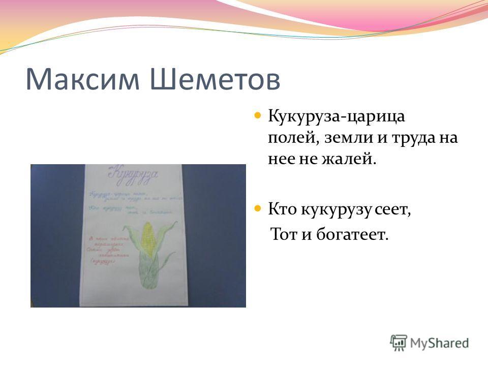 Максим Шеметов Кукуруза-царица полей, земли и труда на нее не жалей. Кто кукурузу сеет, Тот и богатеет.