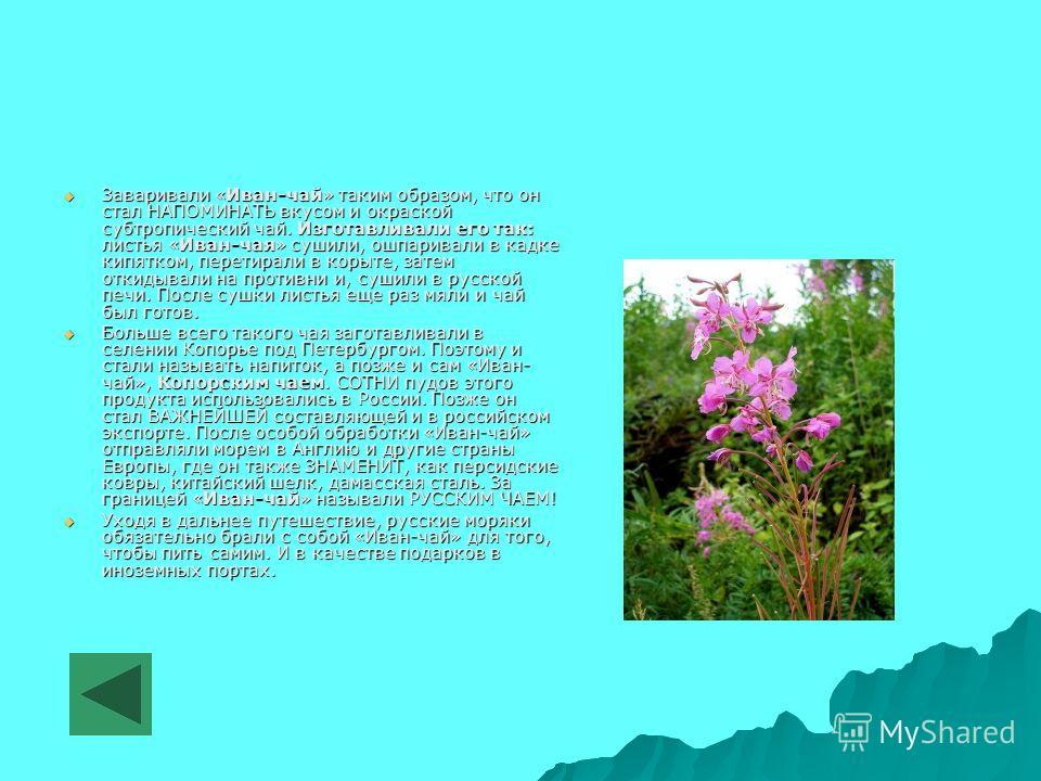 Заваривали «Иван-чай» таким образом, что он стал НАПОМИНАТЬ вкусом и окраской субтропический чай. Изготавливали его так: листья «Иван-чая» сушили, ошпаривали в кадке кипятком, перетирали в корыте, затем откидывали на противни и, сушили в русской печи