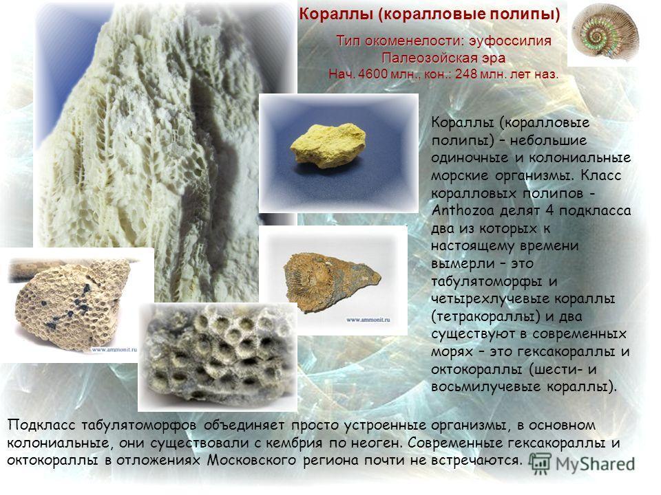 Подкласс табулятоморфов объединяет просто устроенные организмы, в основном колониальные, они существовали с кембрия по неоген. Современные гексакораллы и октокораллы в отложениях Московского региона почти не встречаются. Кораллы (коралловые полипы) –