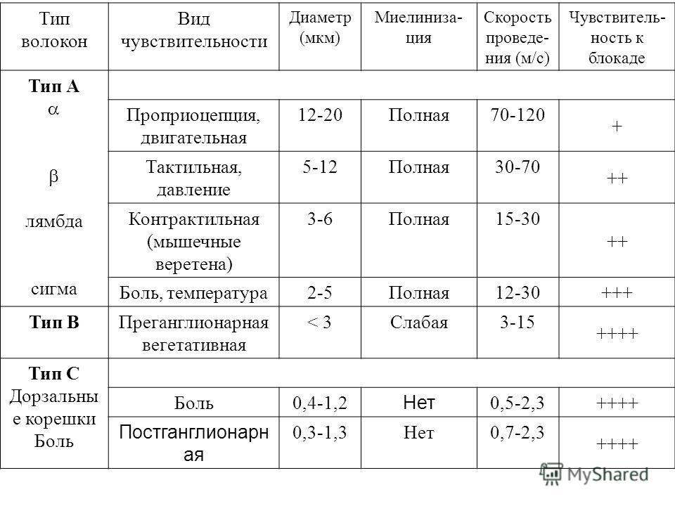 Тип волокон Вид чувствительности Диаметр (мкм) Миелиниза- ция Скорость проведе- ния (м/с) Чувствитель- ность к блокаде Тип А лямбда сигма Проприоцепция, двигательная 12-20Полная70-120 + Тактильная, давление 5-12Полная30-70 ++ Контрактильная (мышечные