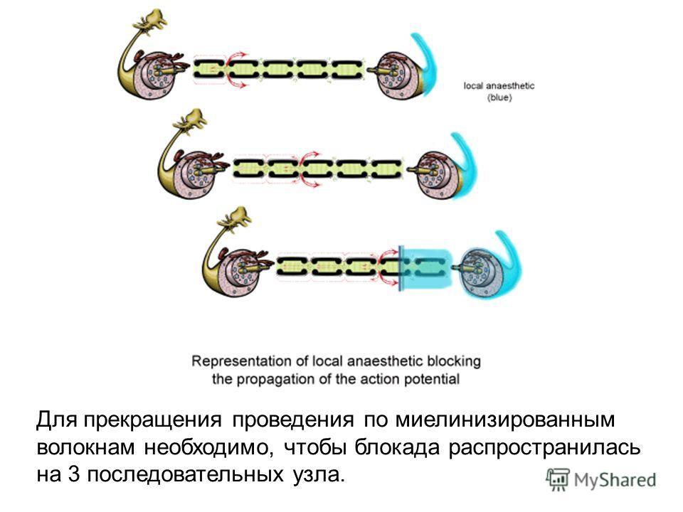 Для прекращения проведения по миелинизированным волокнам необходимо, чтобы блокада распространилась на 3 последовательных узла.