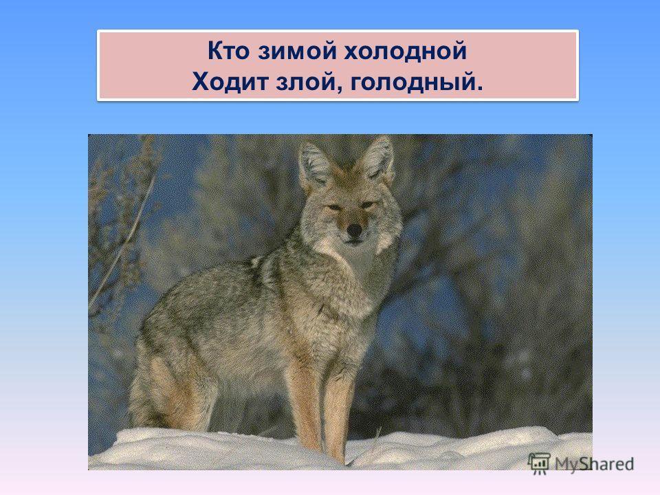 Кто зимой холодной Ходит злой, голодный. Кто зимой холодной Ходит злой, голодный.