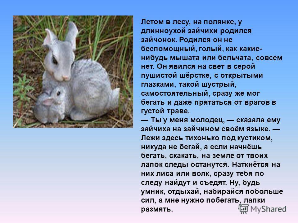 Летом в лесу, на полянке, у длинноухой зайчихи родился зайчонок. Родился он не беспомощный, голый, как какие- нибудь мышата или бельчата, совсем нет. Он явился на свет в серой пушистой шёрстке, с открытыми глазками, такой шустрый, самостоятельный, ср