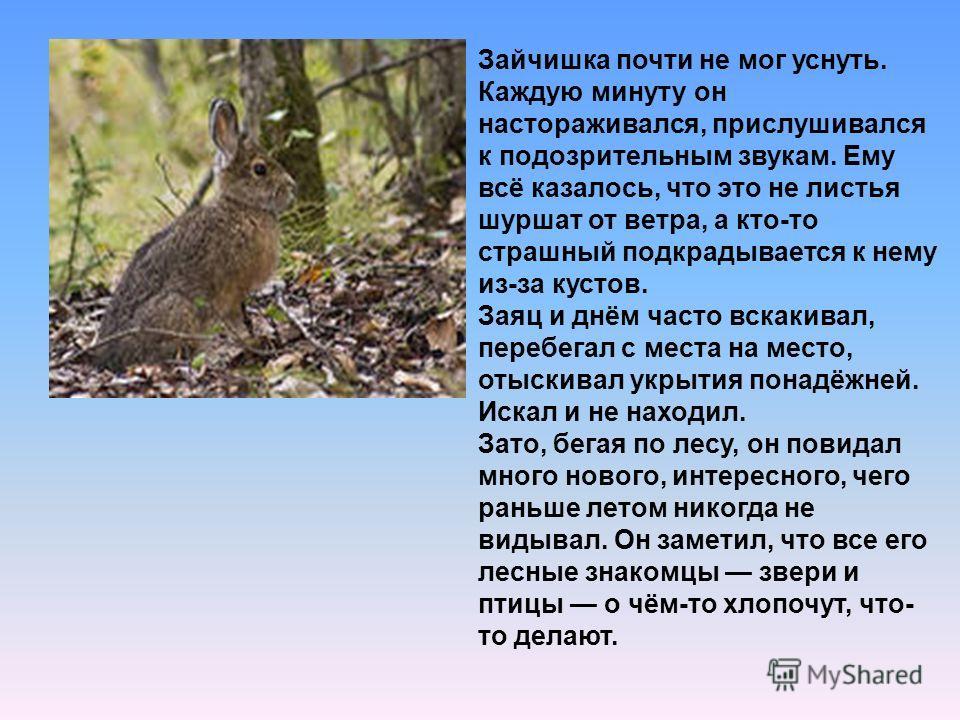 Зайчишка почти не мог уснуть. Каждую минуту он настораживался, прислушивался к подозрительным звукам. Ему всё казалось, что это не листья шуршат от ветра, а кто-то страшный подкрадывается к нему из-за кустов. Заяц и днём часто вскакивал, перебегал с