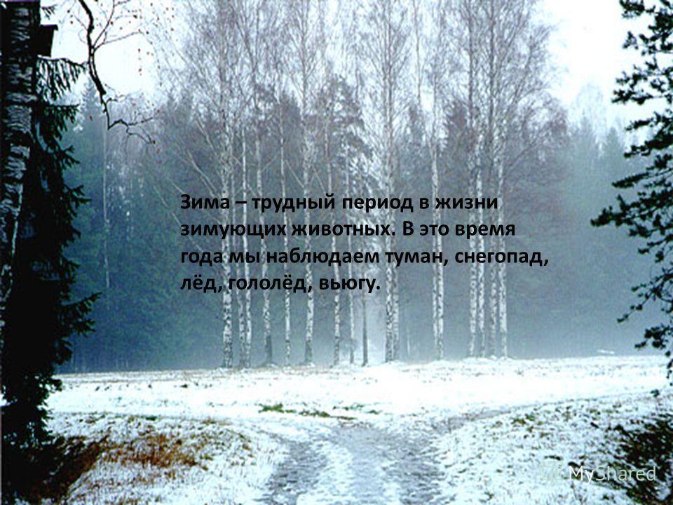 Зима – трудный период в жизни зимующих животных. В это время года мы наблюдаем туман, снегопад, лёд, гололёд, вьюгу.