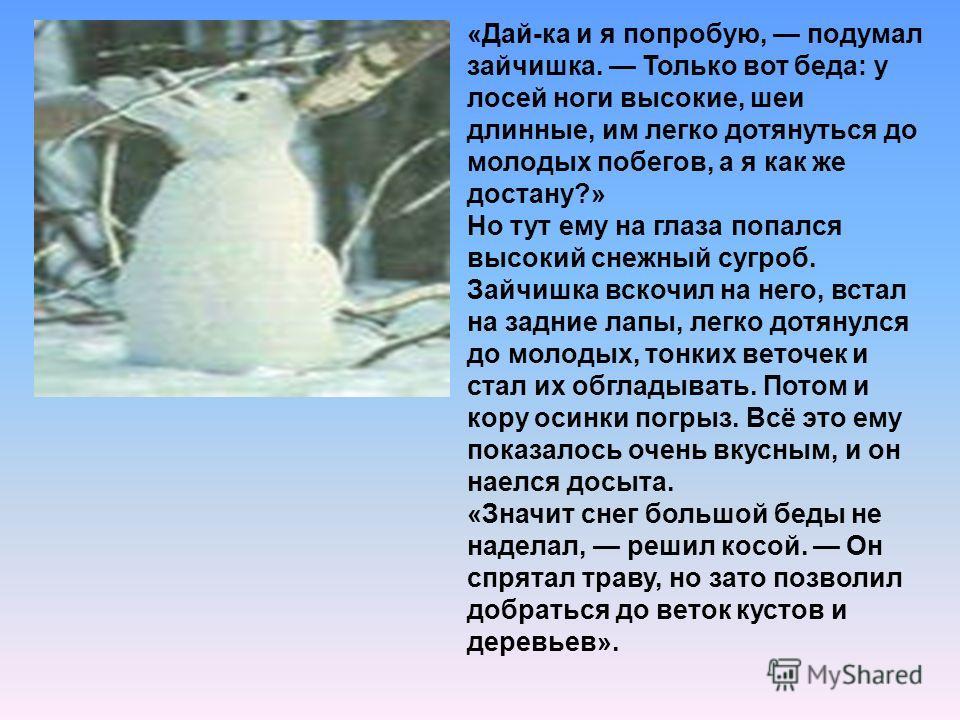 «Дай-ка и я попробую, подумал зайчишка. Только вот беда: у лосей ноги высокие, шеи длинные, им легко дотянуться до молодых побегов, а я как же достану?» Но тут ему на глаза попался высокий снежный сугроб. Зайчишка вскочил на него, встал на задние лап