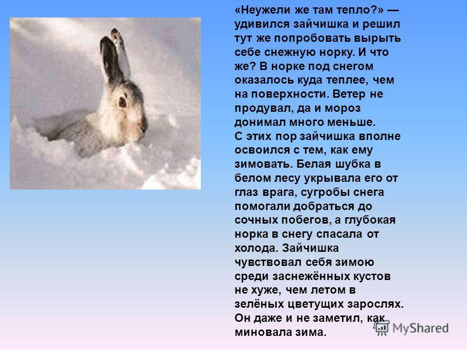 «Неужели же там тепло?» удивился зайчишка и решил тут же попробовать вырыть себе снежную норку. И что же? В норке под снегом оказалось куда теплее, чем на поверхности. Ветер не продувал, да и мороз донимал много меньше. С этих пор зайчишка вполне осв