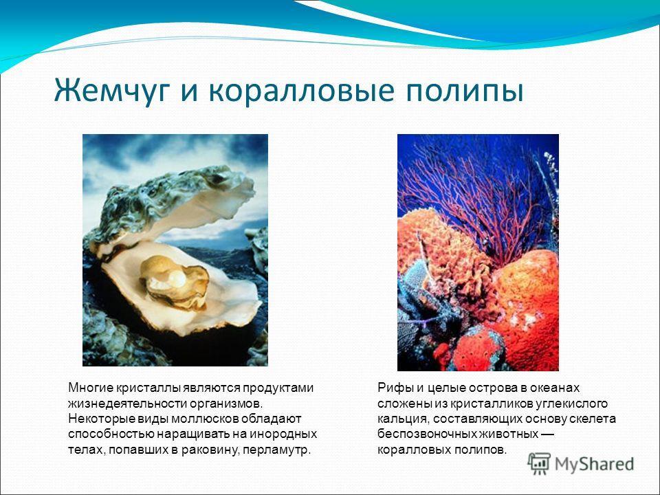 Жемчуг и коралловые полипы Многие кристаллы являются продуктами жизнедеятельности организмов. Некоторые виды моллюсков обладают способностью наращивать на инородных телах, попавших в раковину, перламутр. Рифы и целые острова в океанах сложены из крис
