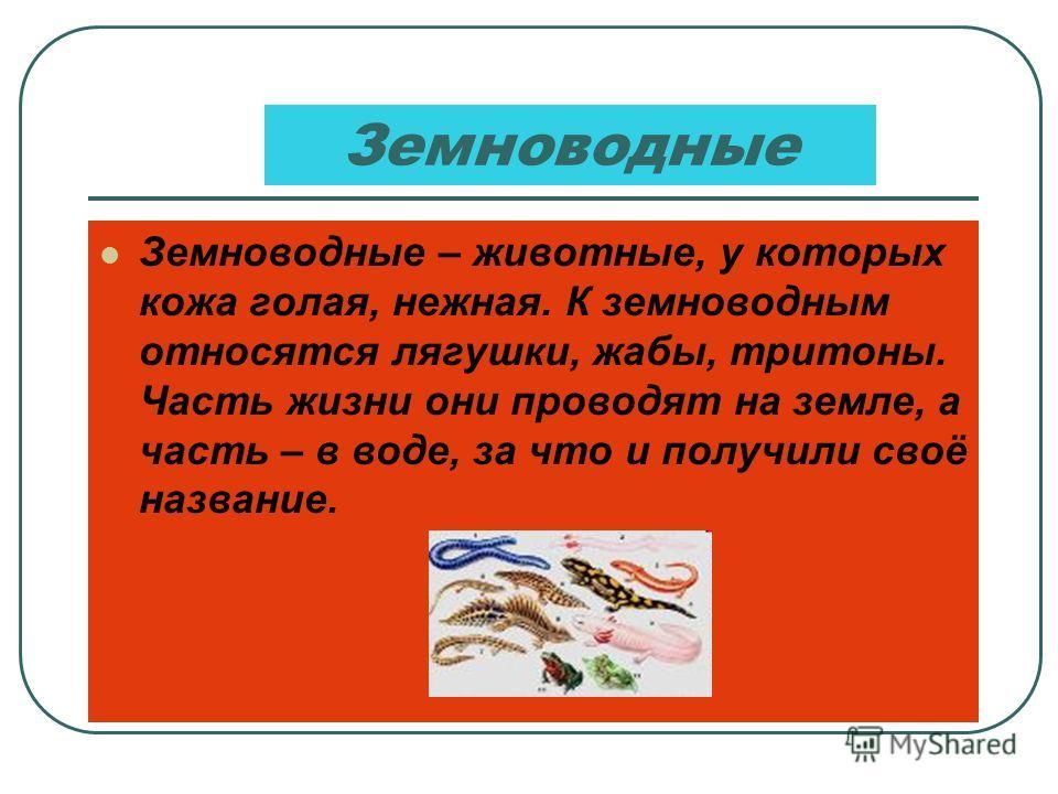 Насекомые Насекомые – это животные, у которых шесть ног. К ним относятся жуки, бабочки, стрекозы, пчёлы, мухи и многие другие.