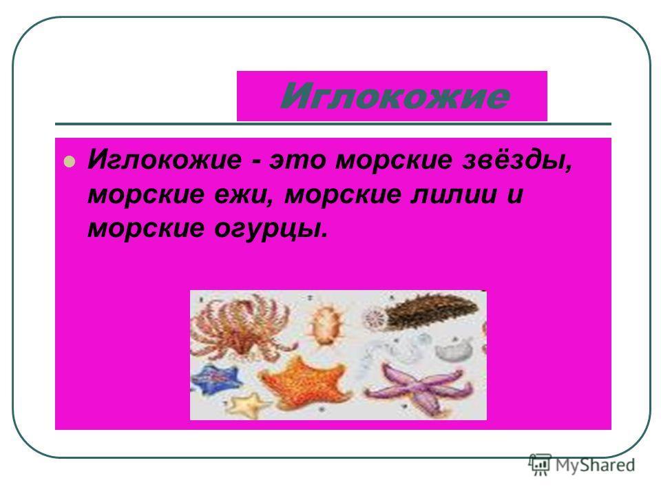 Моллюски Моллюски имеют мягкое тело, которое у многих из них защищено раковиной. К этой группе животных относятся двустворчатые моллюски, улитки, слизни, осьминоги, кальмары.
