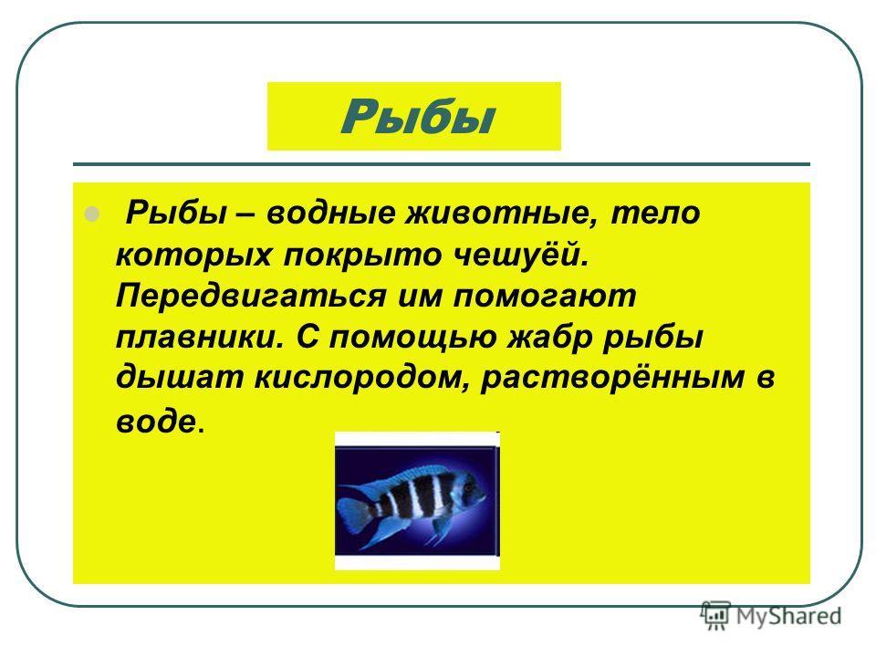 Иглокожие Иглокожие - это морские звёзды, морские ежи, морские лилии и морские огурцы.