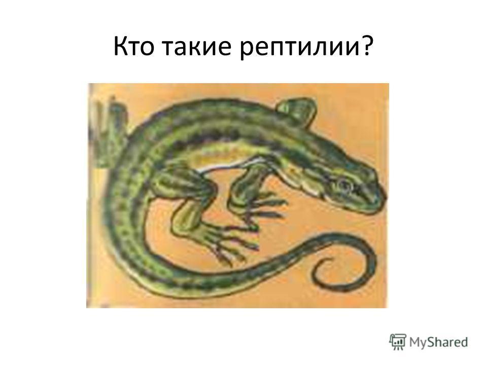 Кто такие рептилии?
