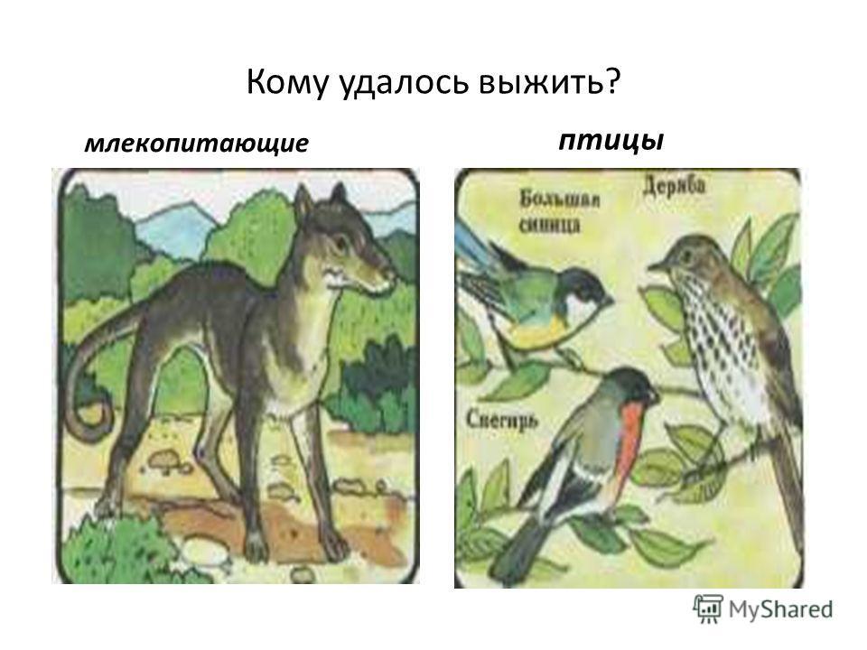 Кому удалось выжить? млекопитающие птицы
