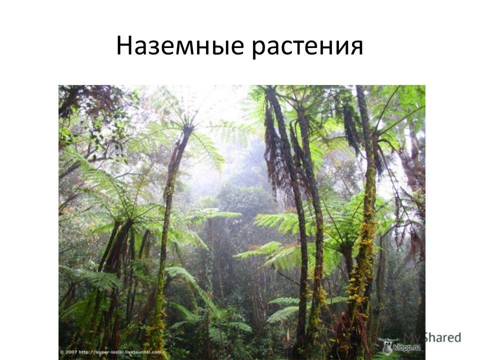 Наземные растения