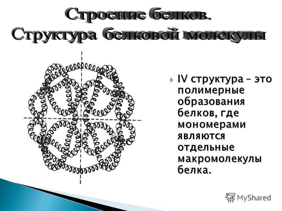 IV структура – это полимерные образования белков, где мономерами являются отдельные макромолекулы белка. IV структура – это полимерные образования белков, где мономерами являются отдельные макромолекулы белка.