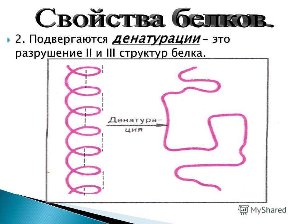 2. Подвергаются денатурации - это разрушение II и III структур белка.