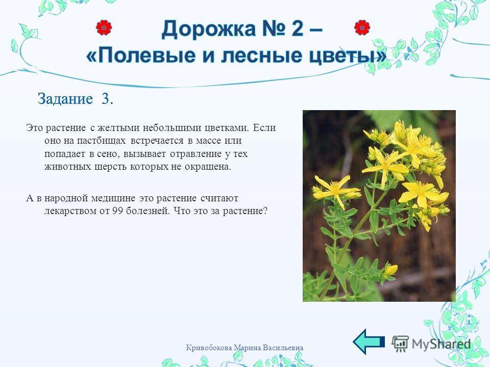 Это растение с желтыми небольшими цветками. Если оно на пастбищах встречается в массе или попадает в сено, вызывает отравление у тех животных шерсть которых не окрашена. А в народной медицине это растение считают лекарством от 99 болезней. Что это за