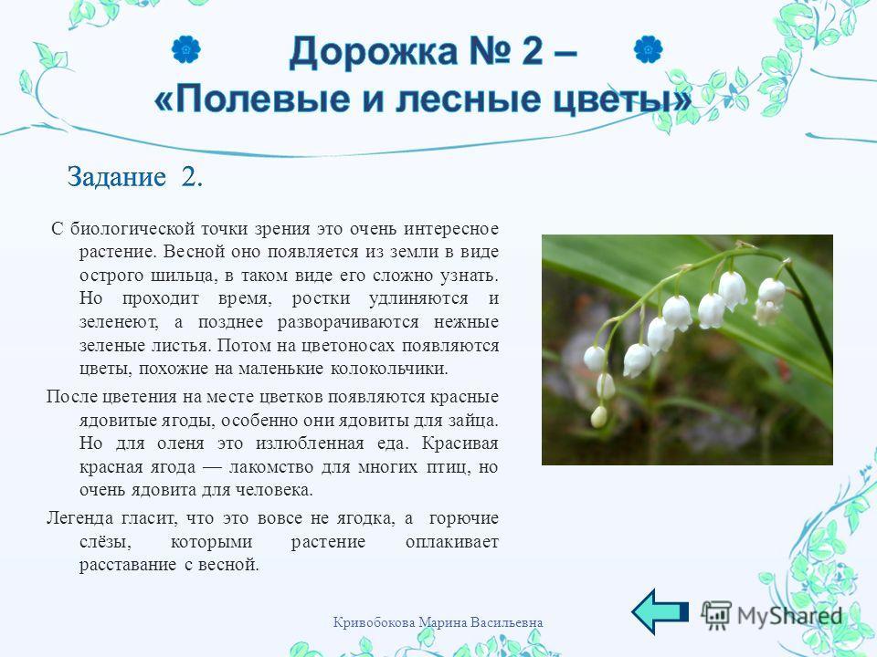 С биологической точки зрения это очень интересное растение. Весной оно появляется из земли в виде острого шильца, в таком виде его сложно узнать. Но проходит время, ростки удлиняются и зеленеют, а позднее разворачиваются нежные зеленые листья. Потом