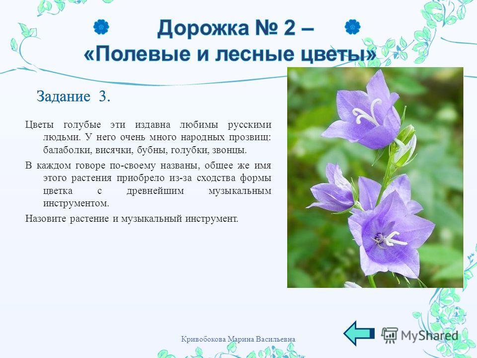 Цветы голубые эти издавна любимы русскими людьми. У него очень много народных прозвищ : балаболки, висячки, бубны, голубки, звонцы. В каждом говоре по - своему названы, общее же имя этого растения приобрело из - за сходства формы цветка с древнейшим