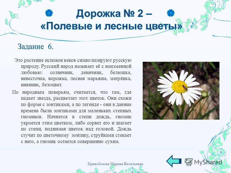 Это растение испокон веков символизируют русскую природу. Русский народ называет её с неизменной любовью : солнечник, девичник, белюшка, невесточка, ворожка, лесная марьяша, матрёнка, нивяник, белоцвет. По народным поверьям, считается, что там, где п
