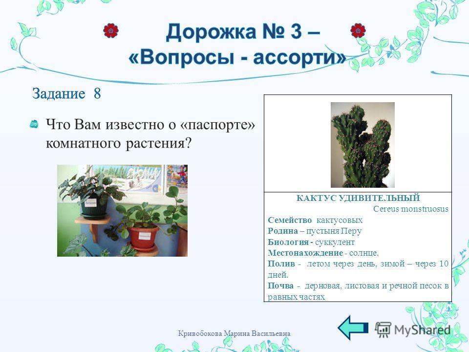Что Вам известно о « паспорте » комнатного растения ? КАКТУС УДИВИТЕЛЬНЫЙ Cereus monstruosus Семейство кактусовых Родина – пустыня Перу Биология - суккулент Местонахождение - солнце. Полив - летом через день, зимой – через 10 дней. Почва - дерновая,