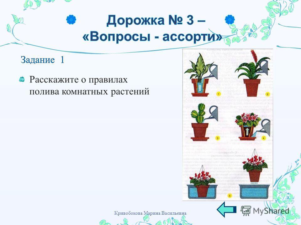 Расскажите о правилах полива комнатных растений Кривобокова Марина Васильевна