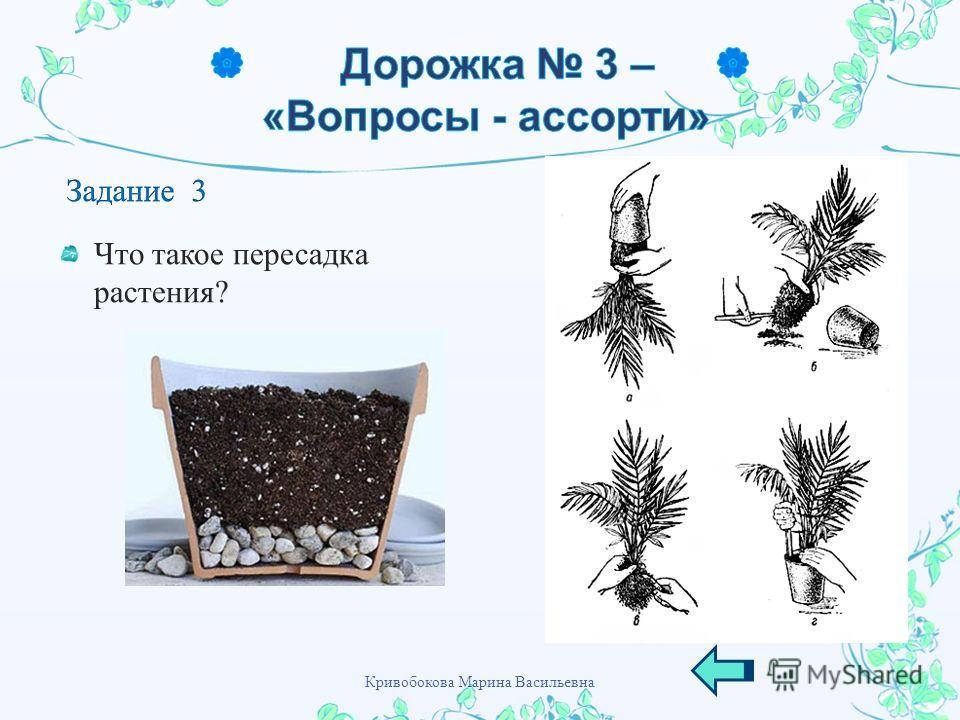 Что такое пересадка растения ? Кривобокова Марина Васильевна