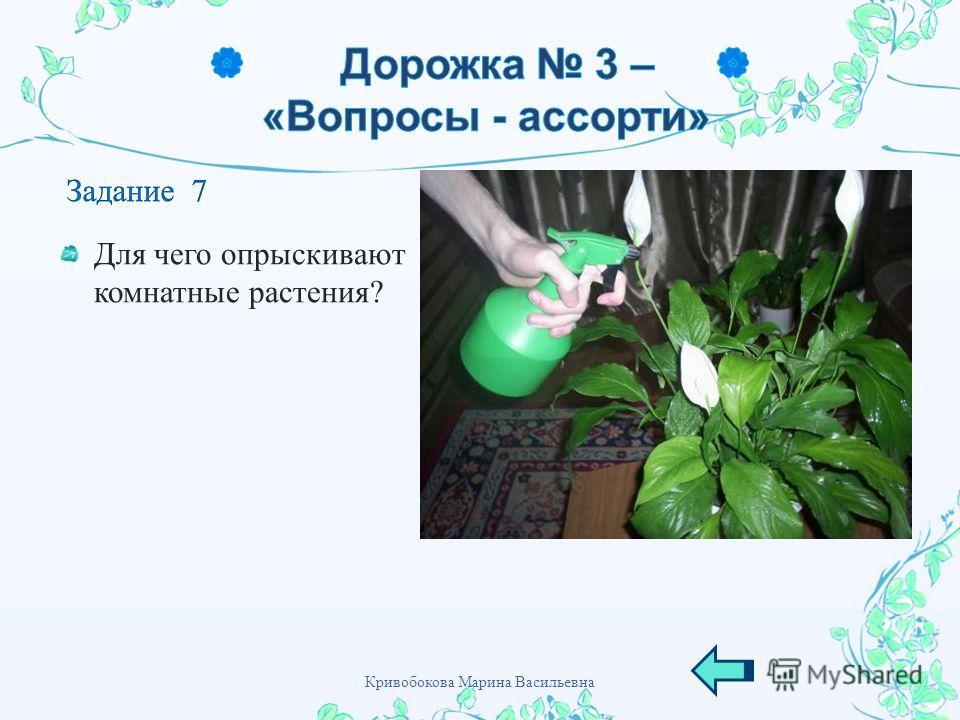 Для чего опрыскивают комнатные растения ? Кривобокова Марина Васильевна