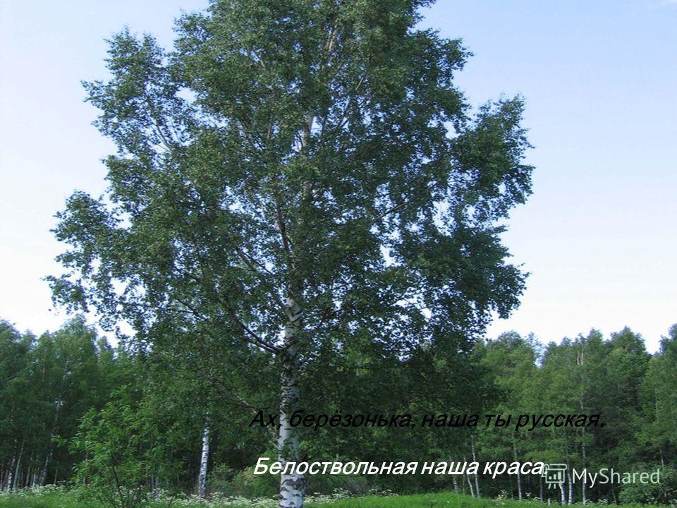 Ах, берёзонька, наша ты русская. Белоствольная наша краса.