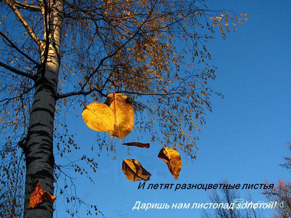 И летят разноцветные листья Даришь нам листопад золотой!