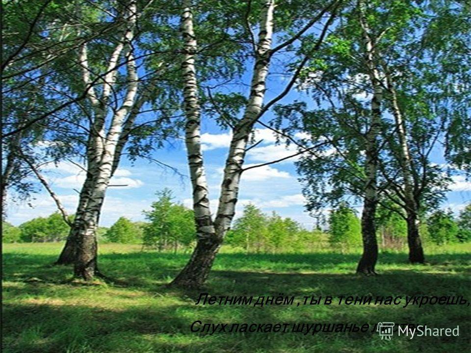 Летним днём,ты в тени нас укроешь, Слух ласкает шуршанье листвы.