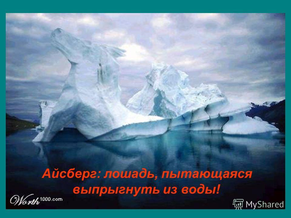 Айсберг: лошадь, пытающаяся выпрыгнуть из воды!