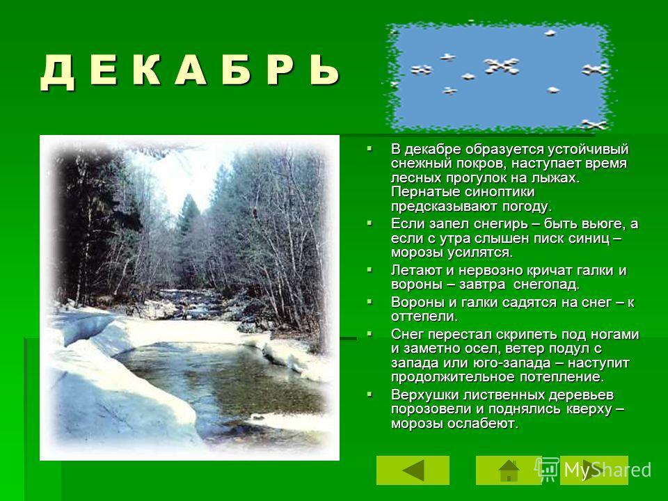 Д Е К А Б Р Ь В декабре образуется устойчивый снежный покров, наступает время лесных прогулок на лыжах. Пернатые синоптики предсказывают погоду. В декабре образуется устойчивый снежный покров, наступает время лесных прогулок на лыжах. Пернатые синопт