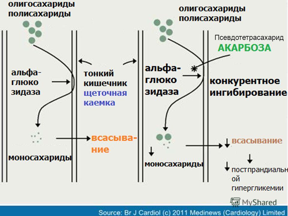 Псевдотетрасахарид