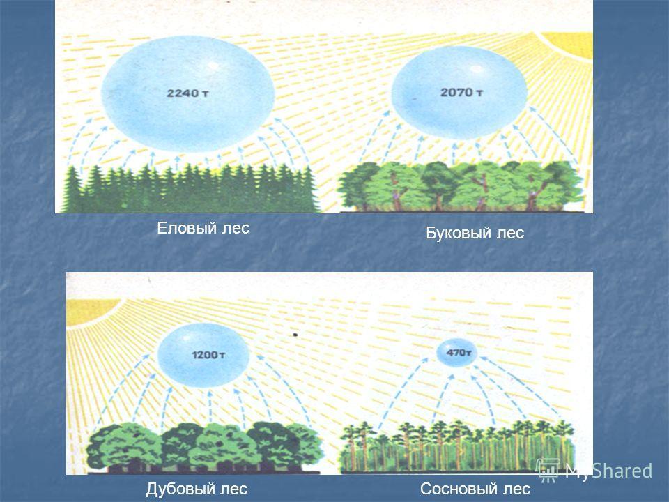 Еловый лес Дубовый лесСосновый лес Буковый лес