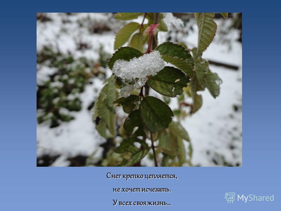 Снег крепко цепляется, не хочет исчезать. У всех своя жизнь…