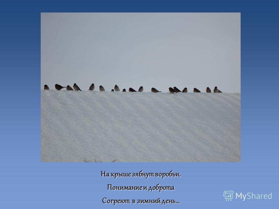 На крыше зябнут воробьи. Понимание и доброта Согреют в зимний день…