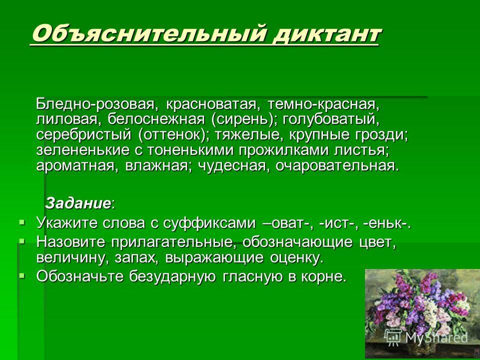 Объяснительный диктант Бледно-розовая, красноватая, темно-красная, лиловая, белоснежная (сирень); голубоватый, серебристый (оттенок); тяжелые, крупные грозди; зелененькие с тоненькими прожилками листья; ароматная, влажная; чудесная, очаровательная. Б