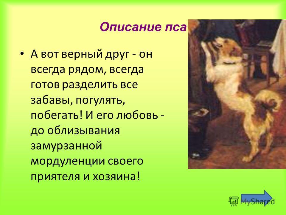 Описание пса А вот верный друг - он всегда рядом, всегда готов разделить все забавы, погулять, побегать! И его любовь - до облизывания замурзанной мордуленции своего приятеля и хозяина!