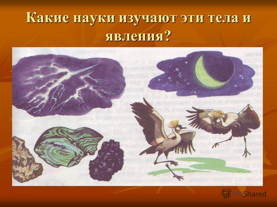 Какие науки изучают эти тела и явления?