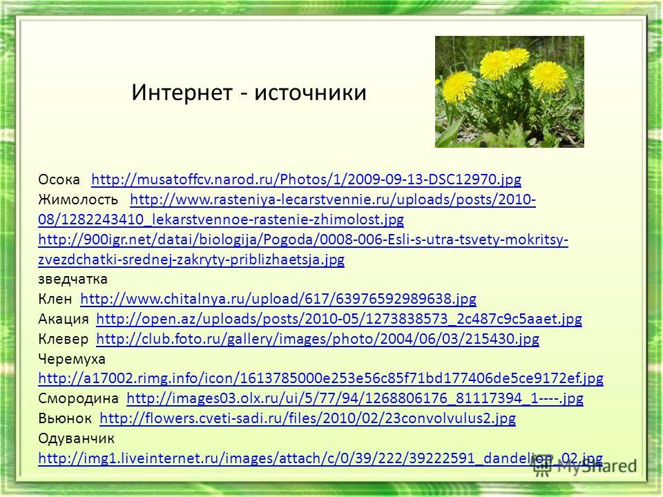 Осока http://musatoffcv.narod.ru/Photos/1/2009-09-13-DSC12970.jpghttp://musatoffcv.narod.ru/Photos/1/2009-09-13-DSC12970.jpg Жимолость http://www.rasteniya-lecarstvennie.ru/uploads/posts/2010- 08/1282243410_lekarstvennoe-rastenie-zhimolost.jpghttp://