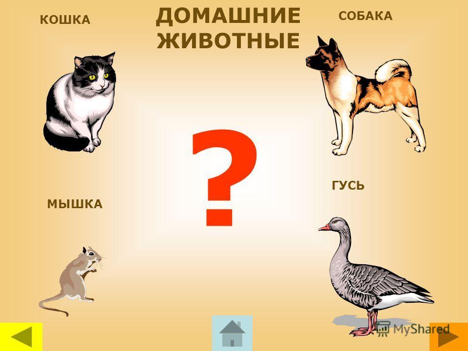 КОШКА СОБАКА ? Послушай голос животного, а потом нажми мышкой на того, чей голос ты услышал. Чтобы перейти на следующую страницу нажми на оранжевую стрелку внизу слайда. Чтобы вернуться назад нажми на желтую кнопку. Если ты решил закончить игру нажми