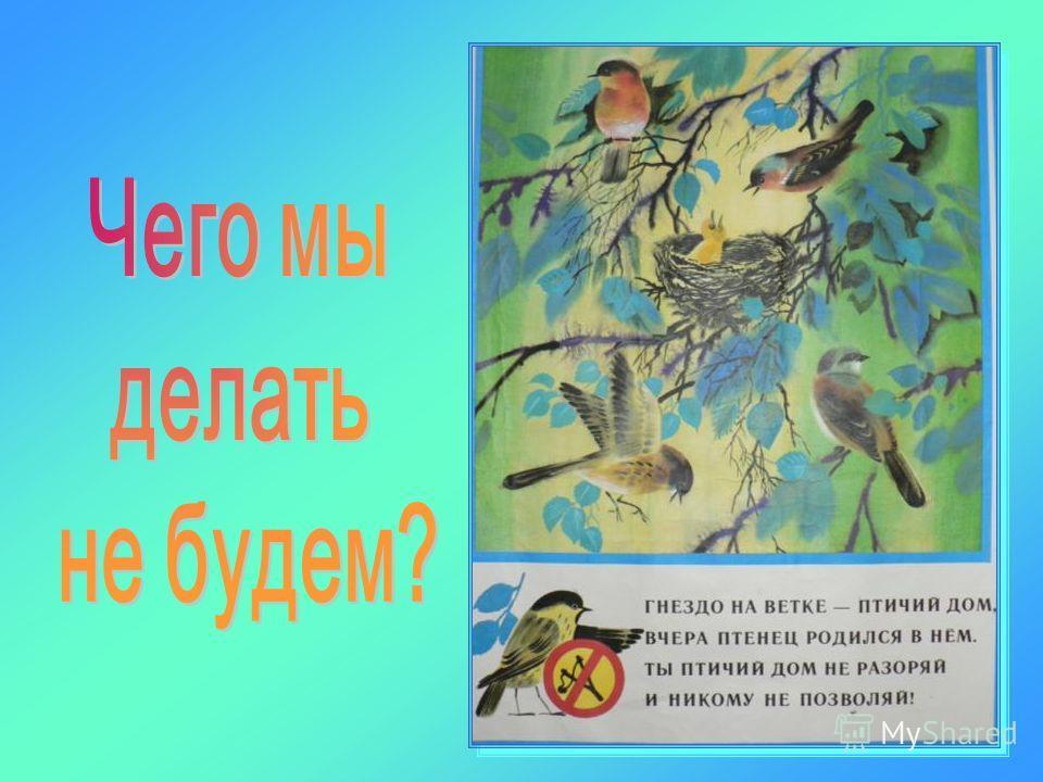 Правила поведения в природе: Не нарушать тишину Не разорять птичьих гнезд Не трогать птенцов руками Не убивать пернатых Не разжигать костров в лесу