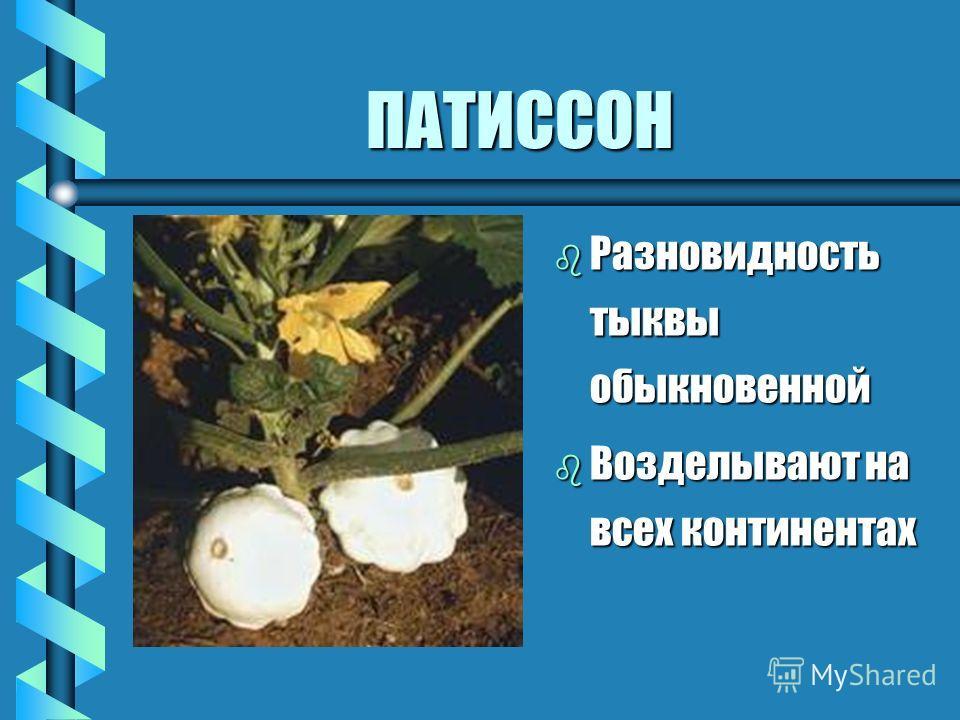 ВНИМАНИЕ: СЕКРЕТ ! b Кабачки можно замораживать, предварительно нарезав кружочками
