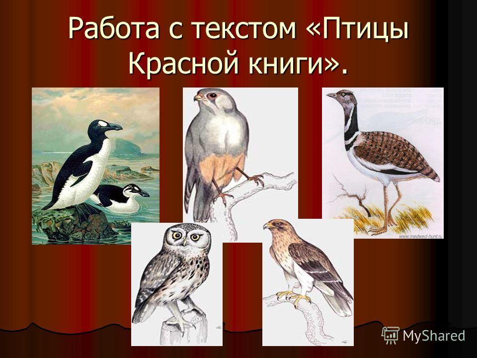 Работа с текстом «Птицы Красной книги».