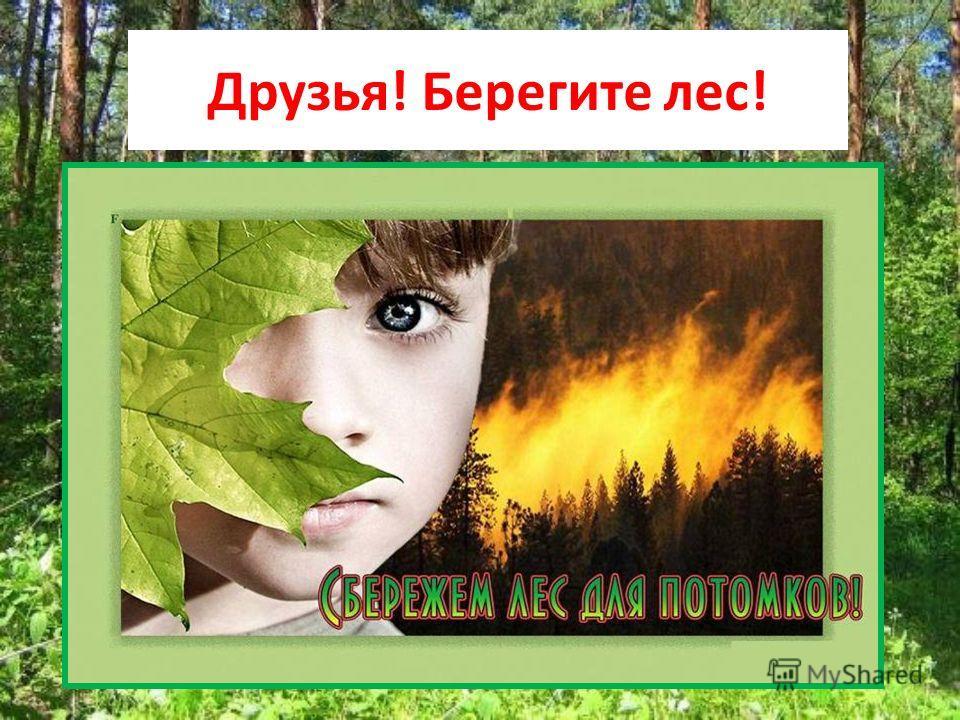 Друзья! Берегите лес!