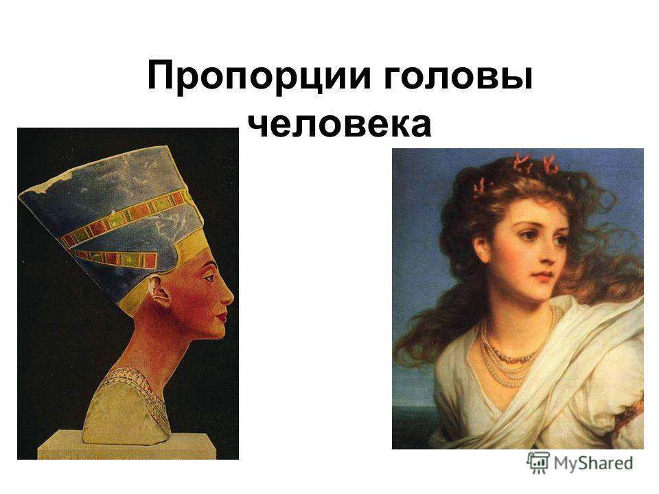 Пропорции головы человека