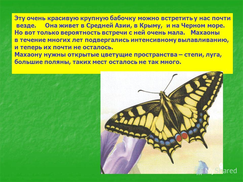 Эту очень красивую крупную бабочку можно встретить у нас почти везде. Она живет в Средней Азии, в Крыму, и на Черном море. Но вот только вероятность встречи с ней очень мала. Махаоны в течение многих лет подвергались интенсивному вылавливанию, и тепе