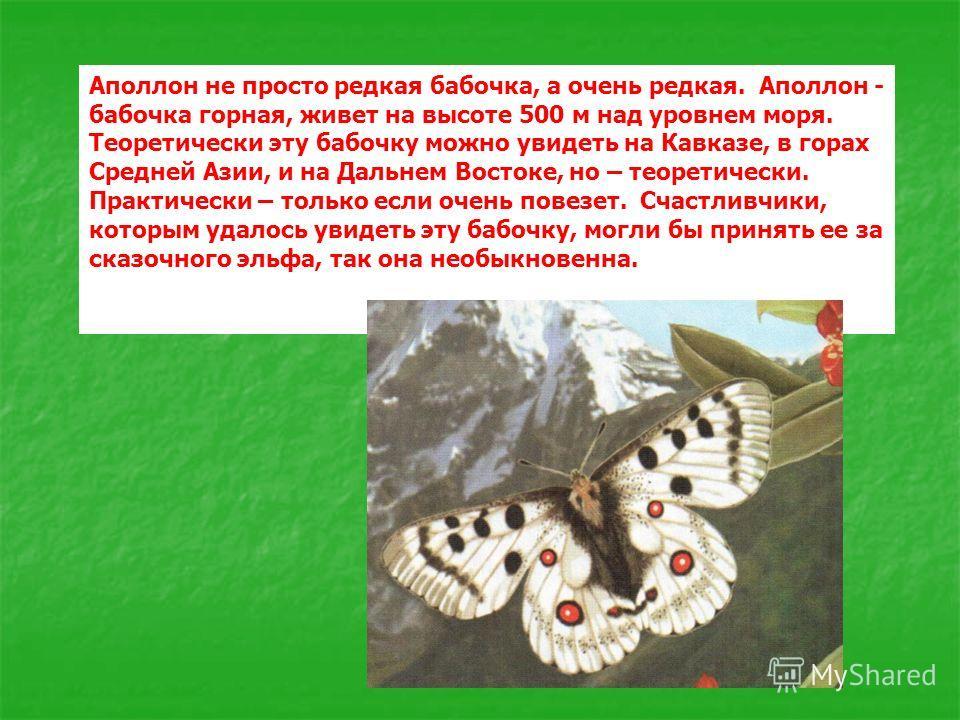 Аполлон не просто редкая бабочка, а очень редкая. Аполлон - бабочка горная, живет на высоте 500 м над уровнем моря. Теоретически эту бабочку можно увидеть на Кавказе, в горах Средней Азии, и на Дальнем Востоке, но – теоретически. Практически – только